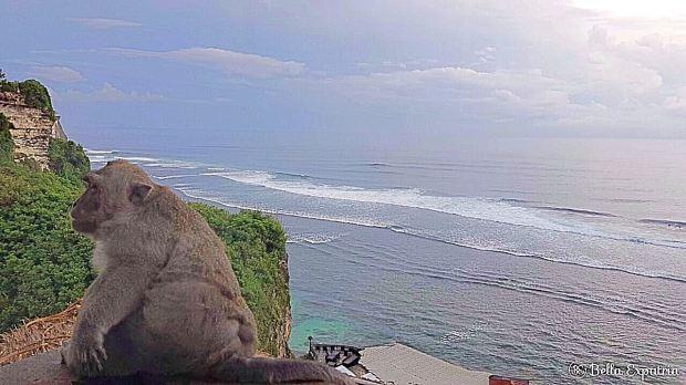 Monkey in Uluwatu, Bali